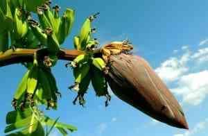 צמחים עם פירות