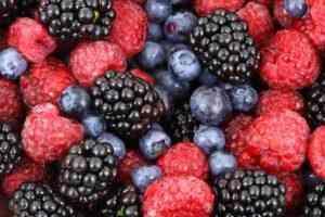צמחים המניבים פירות