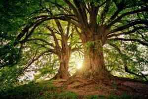 עובדות על עצים