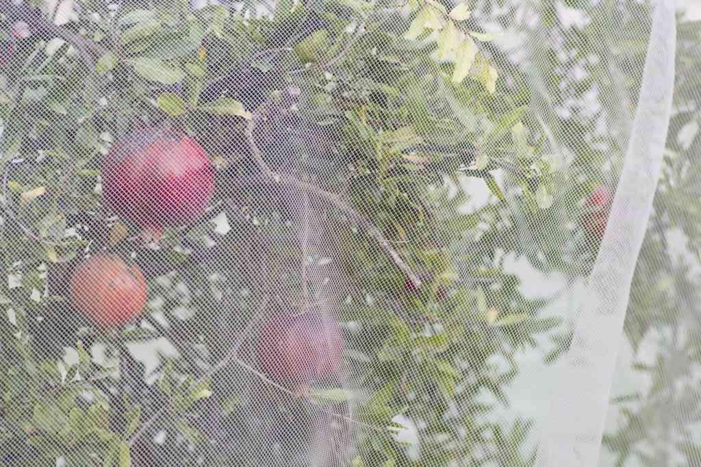 רשת הגנה לעץ