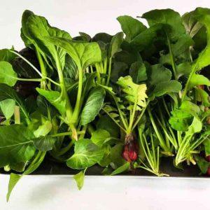 הידרופוניקה ירקות