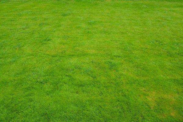lawn-1409818_640 (1)