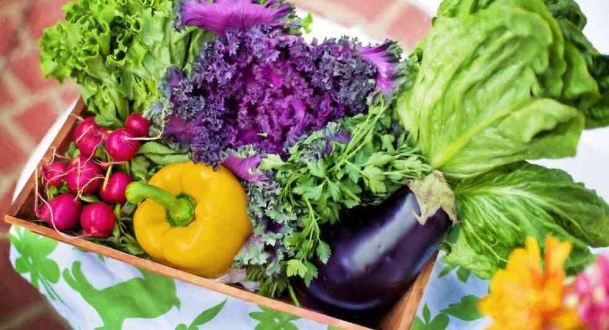 גינת ירקות